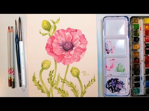 Monhegan Island Poppy in Watercolor Step by step Tutorial
