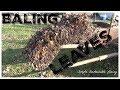 Man Uses Farm Equipment to Bale Leaves in Backyard