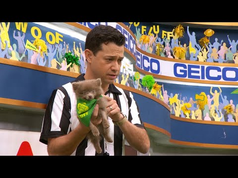 Puppy Profile: Morris the Pomeranian | Puppy Bowl XIV