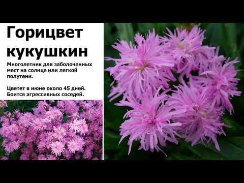 Вопрос: Какие растения для цветника наименее требовательны к плодородности почвы?