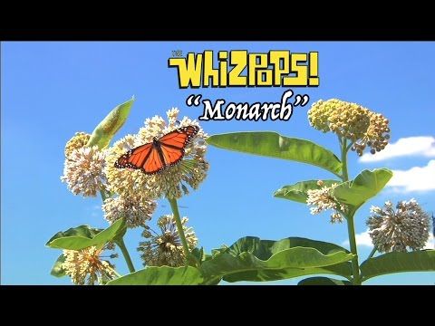 Monarch song by The Whizpops!