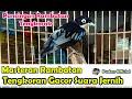 Masteran Rambatan Tengkorak Gacor Suara Jernih Tembakan Rapat Pancingan Rambatan Loreng  Mp3 - Mp4 Download