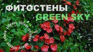 видео вертикальное озеленение
