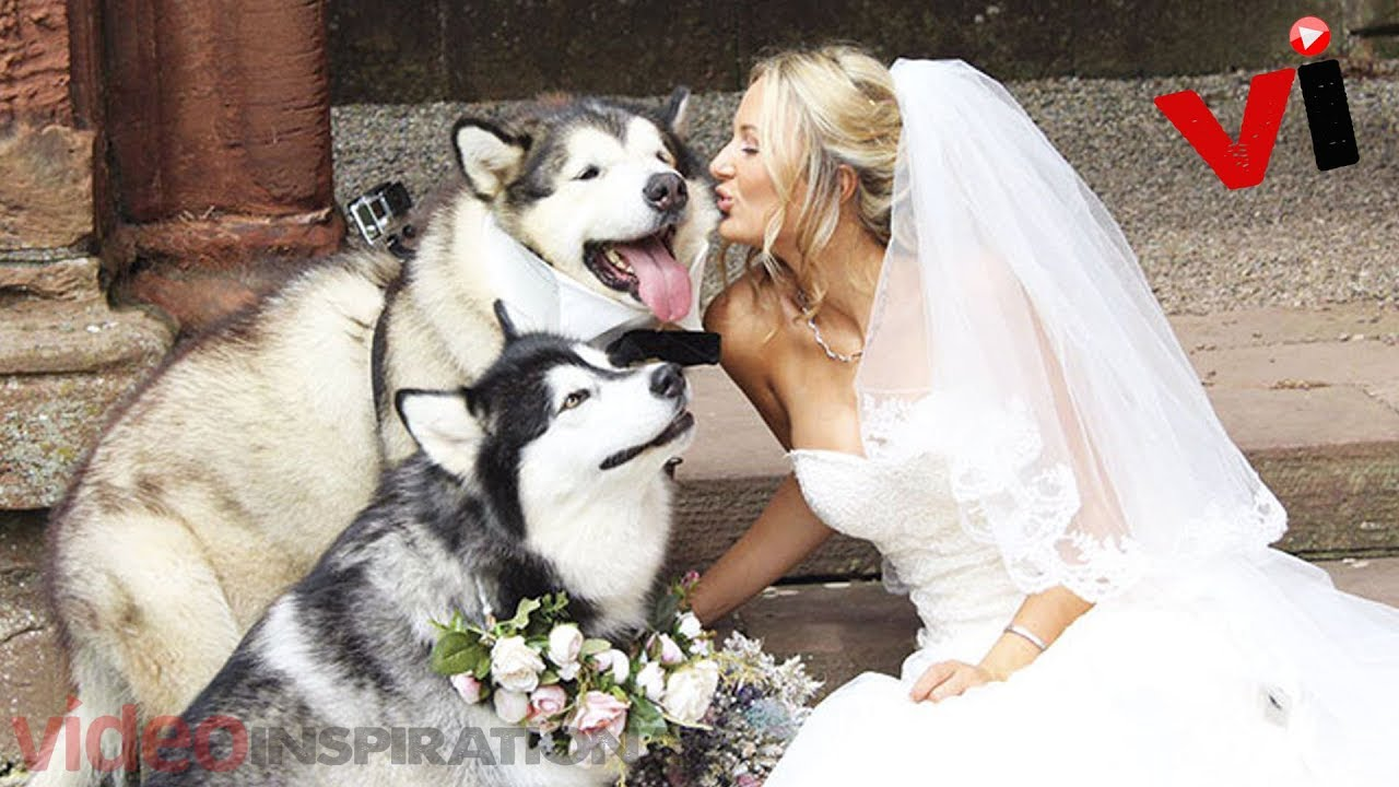 Couple Makes Their Dogs Best Man And Maid Of Honor For Their Wedding