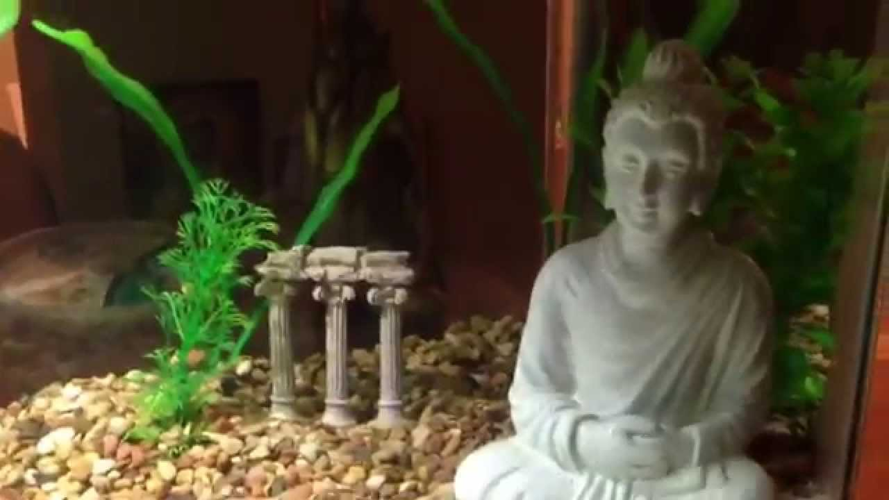 Fish for aquarium with name - My Aquarium Fish Name Miss Betta 007 Buddha Statue And Bubble Maker Youtube