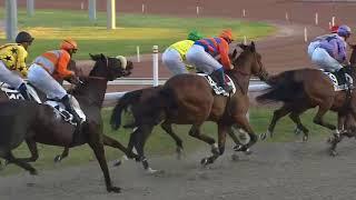Vidéo de la course PMU GRAND PRIX DE MARSEILLE-VIVAUX - PRIX GASTON DEFFERRE