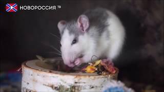 """Новости на """"Новороссия ТВ"""" 31 декабря 2019 года"""
