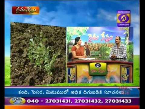 Raithunestam 14-8-15 by DD Yadagiri Hyd