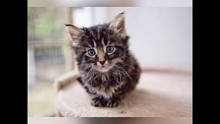 После этого видео ты станешь любить кошек