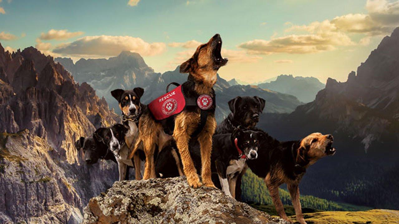 10 قدرات خارقة لدى الكلاب | لا يمكنك تصورها