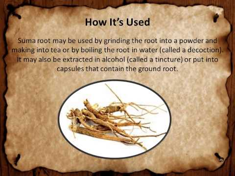 Suma Root Basics - How it helps