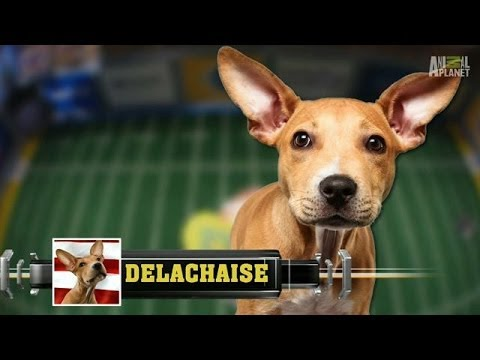 Meet Delachaise | Puppy Bowl X