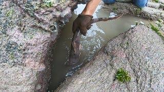 将大鱼内脏撒入海边深水塘,两天后把水全抽干,露出不少值钱海货