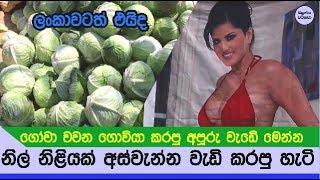 ගොවියෙක් නිල් නිළියක් යොදාගෙන අස්වැන්න වැඩි කරගත්ත හැටි හෙළිකරයි - Cabbage farmer