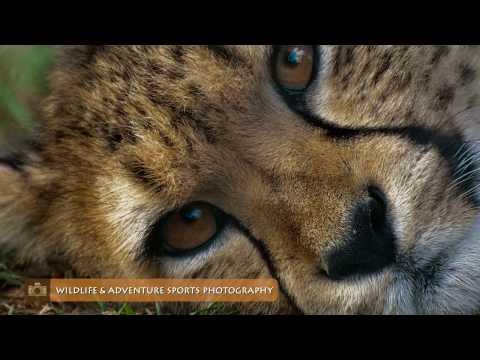Wildlife & Travel Photography Internship