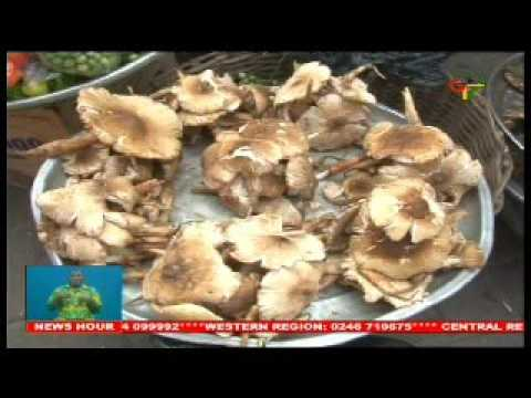 Ghana: Snails And Mushrooms