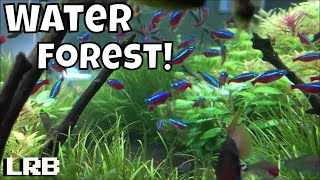 Water Forest Aquatics Fish Room Tour Tips Tricks and Amazement!
