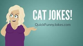 Cat Jokes for Cat Lovers!