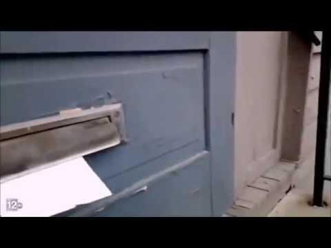 Pet Corner - Ferocious Cat Battles the Mailman Through the Mail Slot