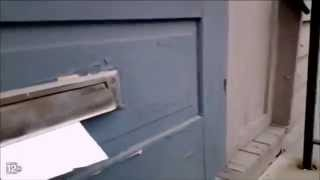 Ferocious Cat Battles the Mailman Through the Mail Slot