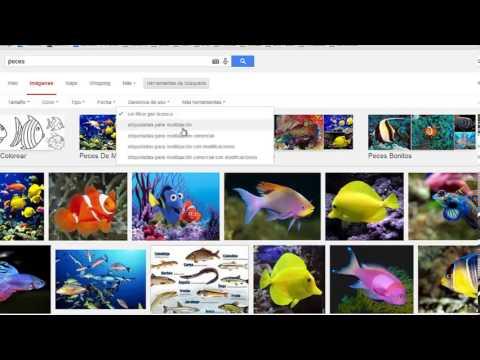Imagenes De Google Libres De Derechos De Autor Y En Alta