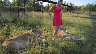 Девушка  в розовом платье и львицы ...или клиент всегда прав ...