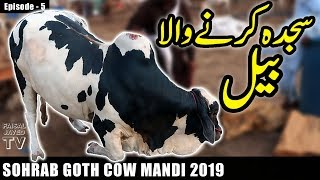 COW MANDI SOHRAB GOTH 2019 KARACHI | Episode – 5 | Video in URDU/HINDI