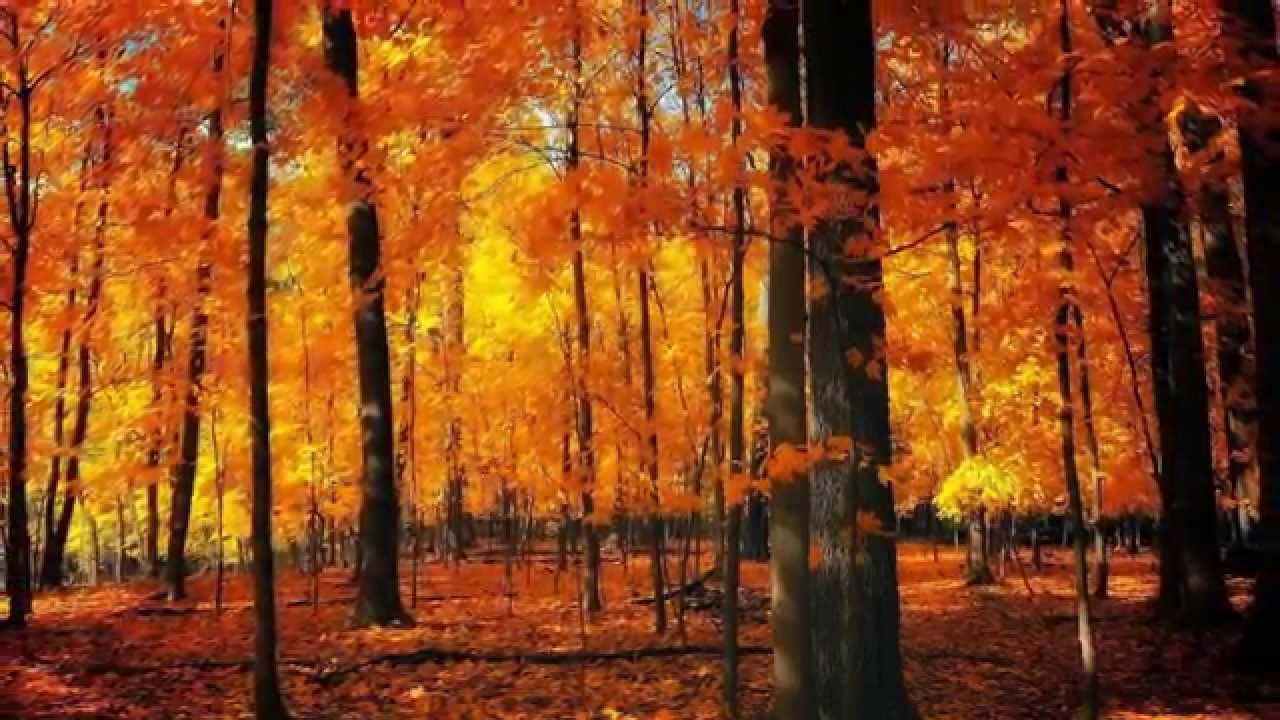 Four seasons autumn antonio vivaldi les quatre saisons - Photo d automne gratuite ...