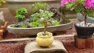 제22회 와송 박을순여사 호산나마을 철쭉,분재,야생화 …