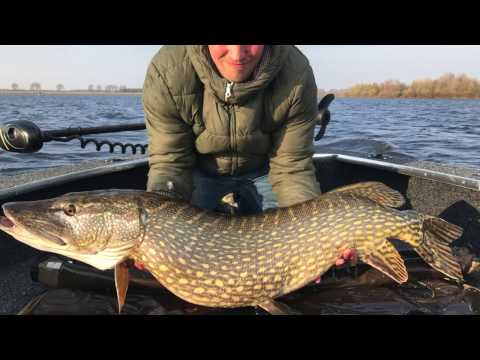 Struikrovers @ volkerak the movie (trailer) pike angling