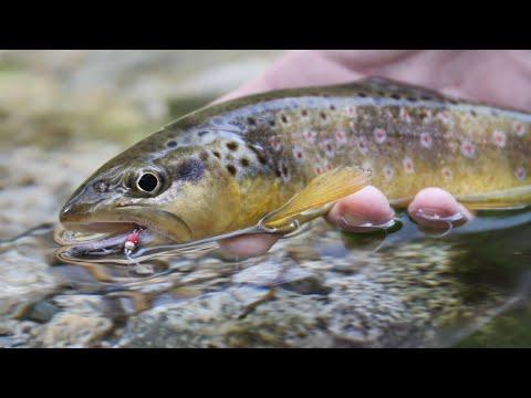 Lavezzinifly - Fly Fishing Alto Chiese, Trentino, Dolomiti, Italy