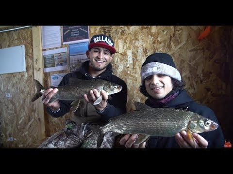 Ice Fishing White Fish With MMA FIGHTERS!