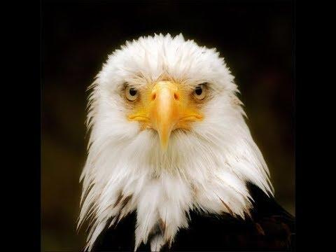 Eagle Spirit - Native American Flute Music by Charles Littleleaf