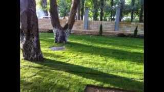 видео Где заказать устройство газона