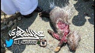 لقطات لحيوان:النيص (الشيهم) مات دهساً بسيارة [الطائف-وادي المخاضة]
