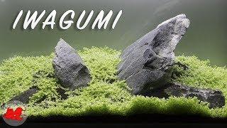 Iwagumi Aquascaping aquarium 60l