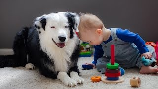 Border Collie Playing with Baby Child  Funny Videos of Dog and Baby