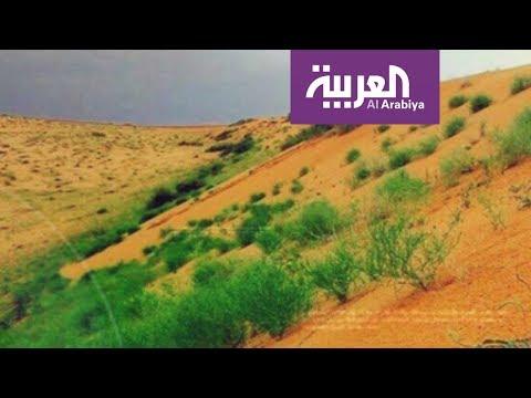 مرايا: عرب يشتمون صحراء العرب!  - 19:21-2017 / 12 / 6