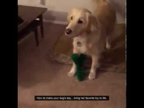 Dog Meets Favorite Toy Life Size YouTube - Dog obsessed with stuffed santa toy gets to meet her idol in real life