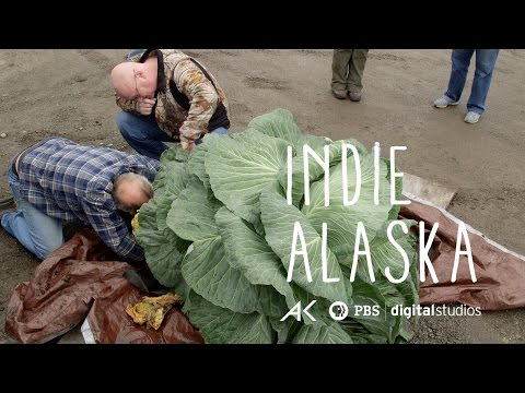 I Am A Giant Cabbage Farmer | INDIE ALASKA