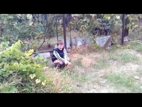 Девченка срет в кустах