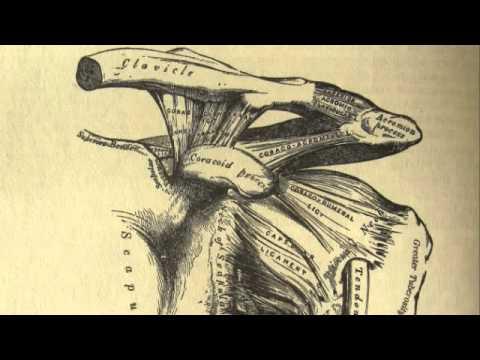 Burdeos - Acromion