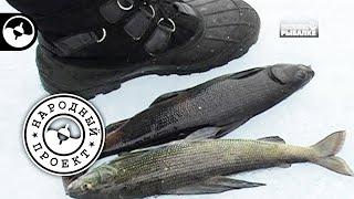 Зимняя рыбалка. Байкал. Сиг и хариус | Народный проект