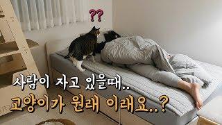 집사가 자는 동안 고양이는 뭘 할까?