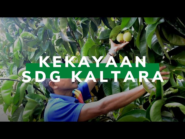Tangani SDG Lokal yang Melimpah, Kaltara Bentuk Komda SDG
