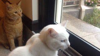 兄猫チロと窓の外を眺めてます。 Today turned out to be a rainy day. ...