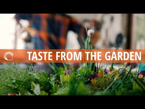 TASTE FROM THE GARDEN moy hill inspired recipes