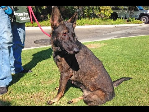 SAMANTHA at Long Beach Animal Shelter for 4 months