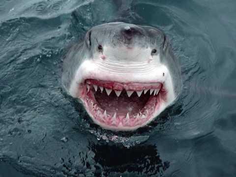 Mampi Swift - Jaws (The Demolition Mix)