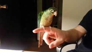 My bird dancing to...no music.